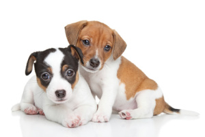 Stop puppy biting and chewing
