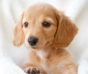 Choose a Fun Word for Potty Training Your Puppy