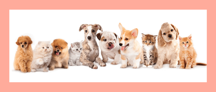 Deciding on the Right Puppy to Adopt